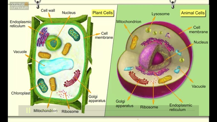 AC Life Science: Comparing Plant and Animal Cells app for ...
