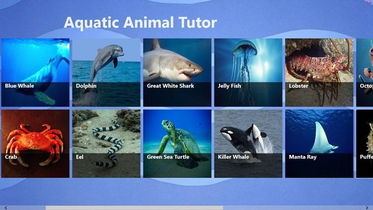 Aquatic Animals With Names
